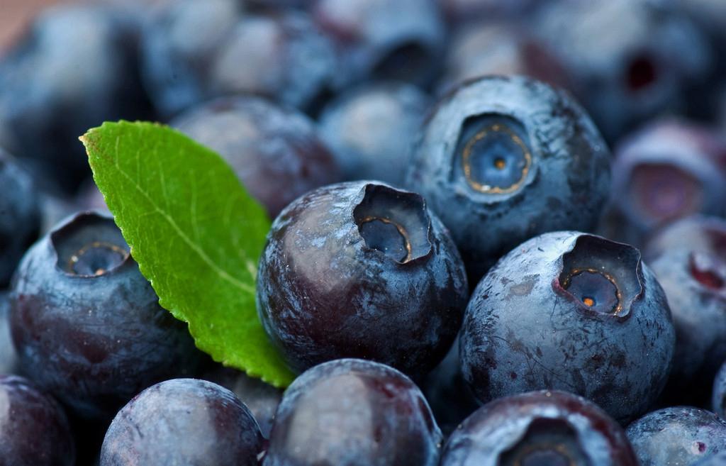 抗衰老去皱功效排行——蓝莓