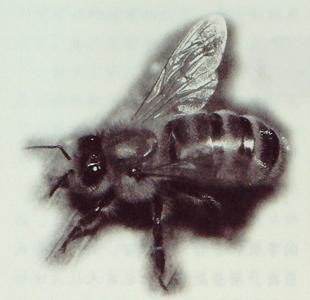 蜂子的故事