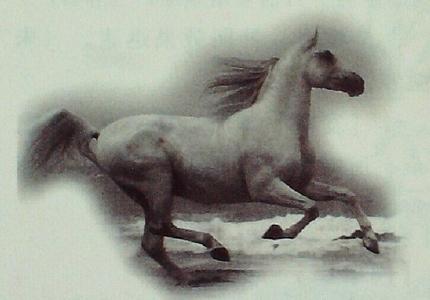 白马茎的故事