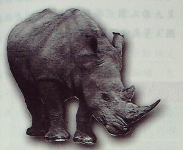 犀角的故事