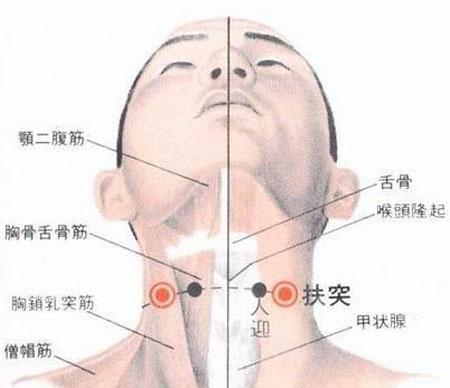扶突穴→治干咳、气喘