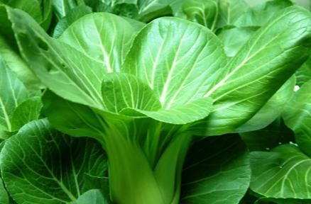 白菜:解毒、消肿、美容