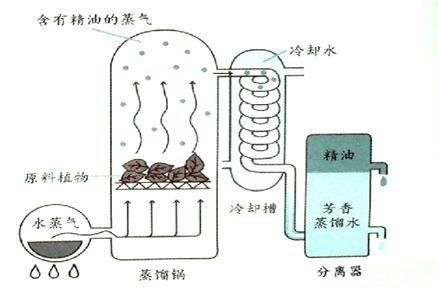 大部分的精油采用的萃取方法