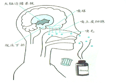 精油如何作用于身心