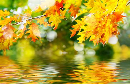 秋季吃的酸味食物,血管焕然一新