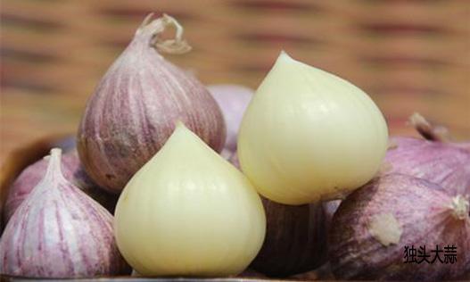 脂肪肝食疗食谱——萝卜大蒜骨头汤
