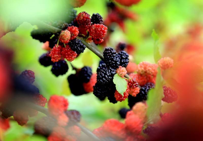 吃哪些水果抗衰老?