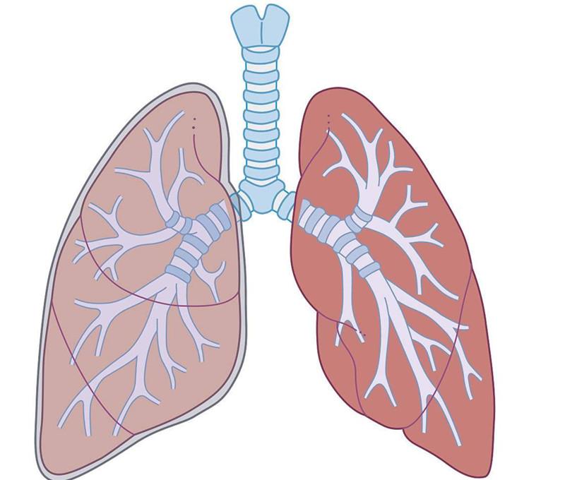 运动可以加强肺部呼吸功能