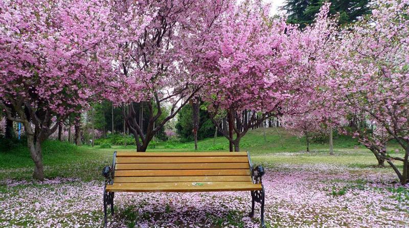 春季气候对情志的影响
