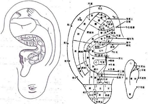 耳穴减肥时的耳压反应