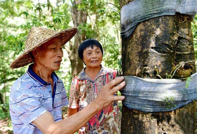 紫竹村依靠种植铁皮石斛成功脱贫