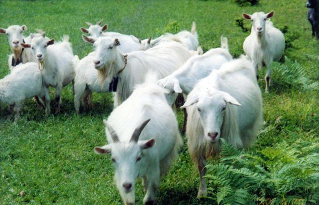 冬季羊肉如何进补