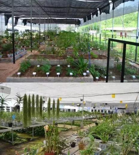 岭南中草药种质种苗繁育基地