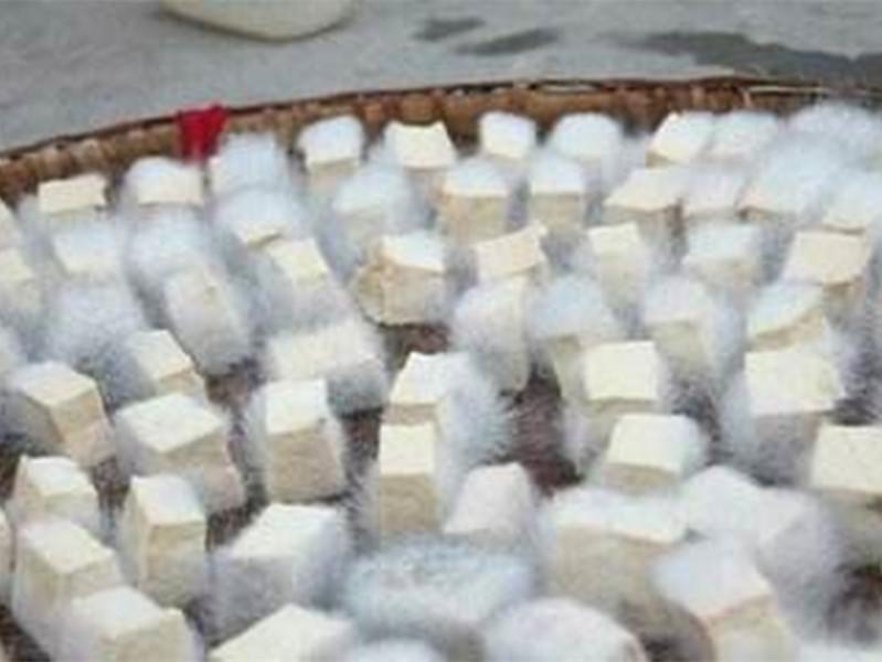 中国已知利用微生物和酶加工食品的技术
